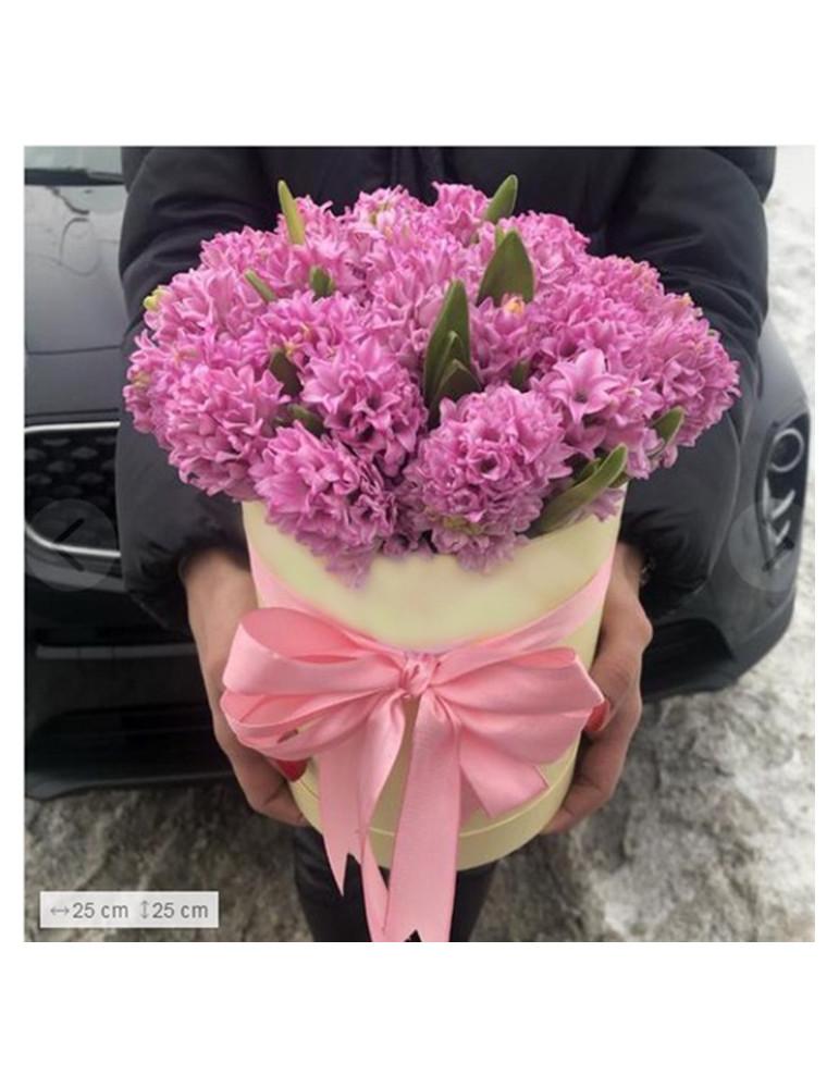 25 Rozā hiacintes kārbā