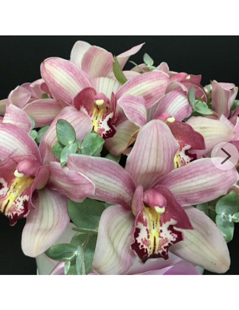 Green orchids in hat box