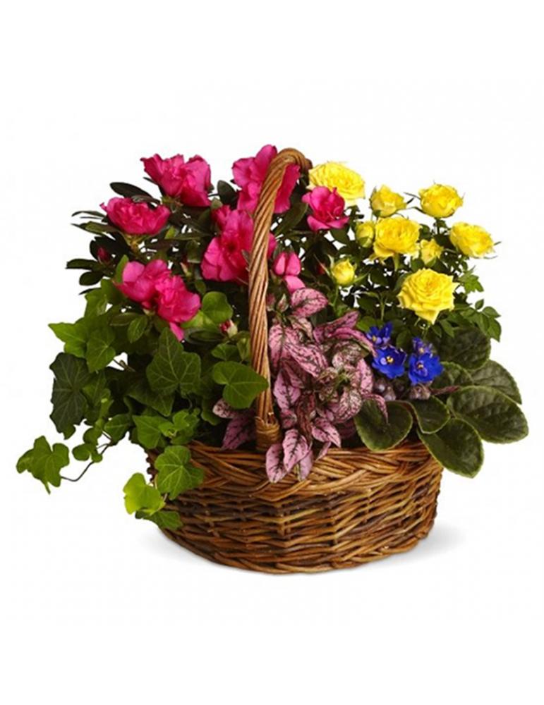 Ziedošu un zaļu augu grozs