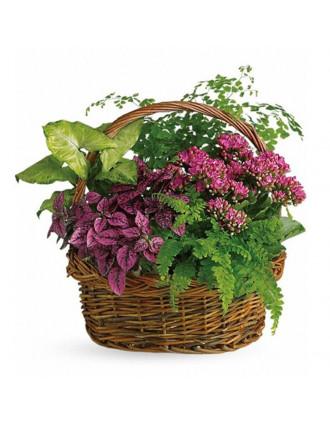 Kорзина с цветущими и зелёными растениями