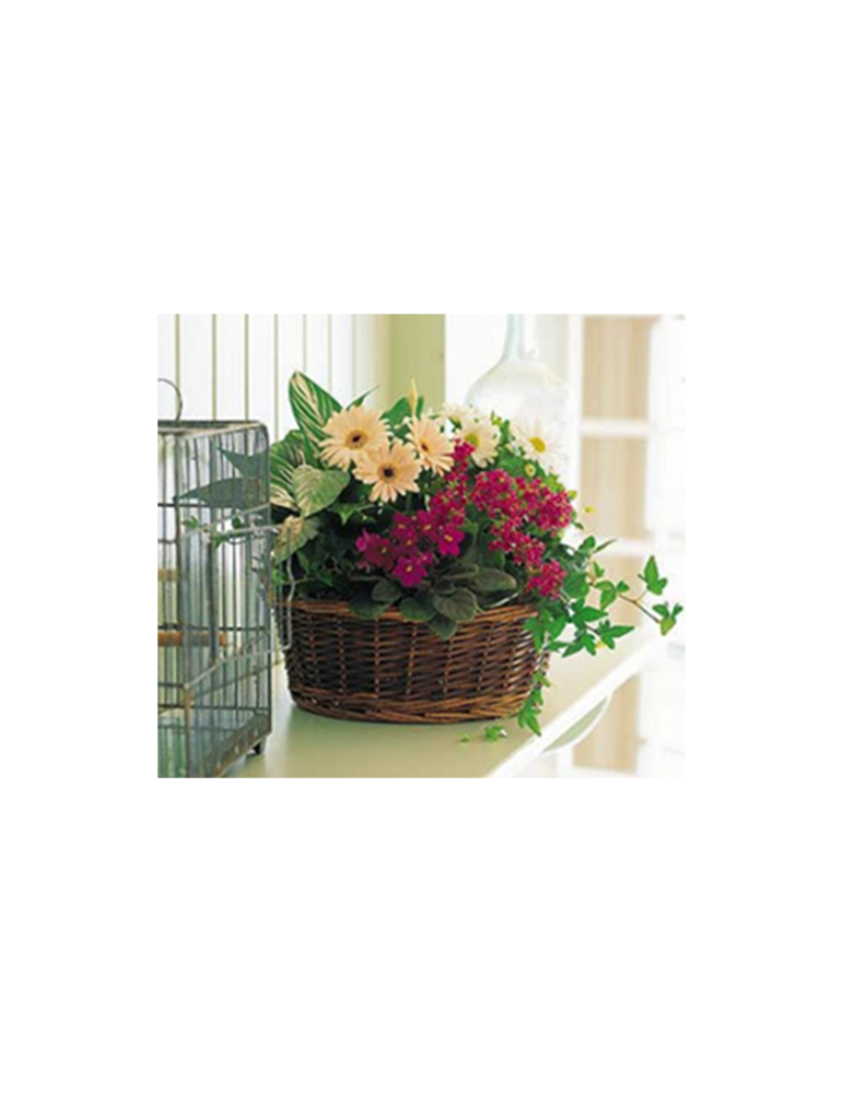 """Basket With Blooming And Green Plants """"EUROPA 2"""""""