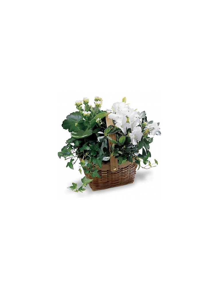 Basket With Blooming And Green Plants