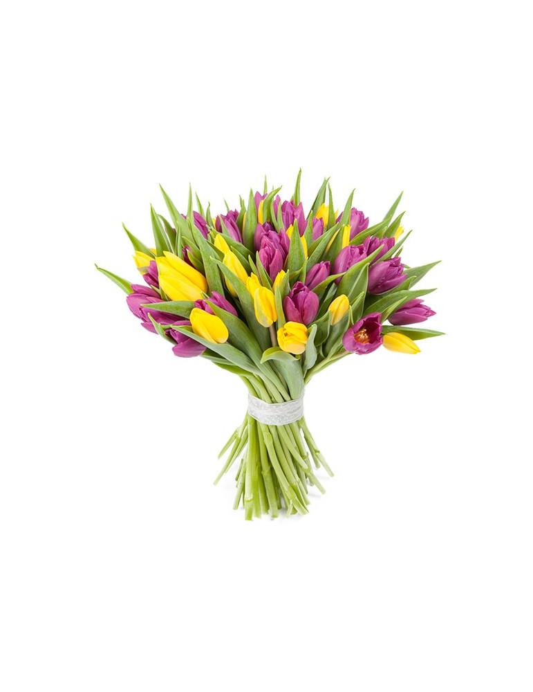 31 dzeltena un violeta tulpe