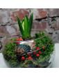 Ziemassvētku kompozīcija ar hiacinti