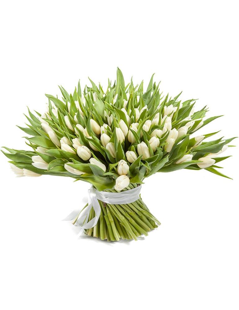 51 или 101 белый тюльпан