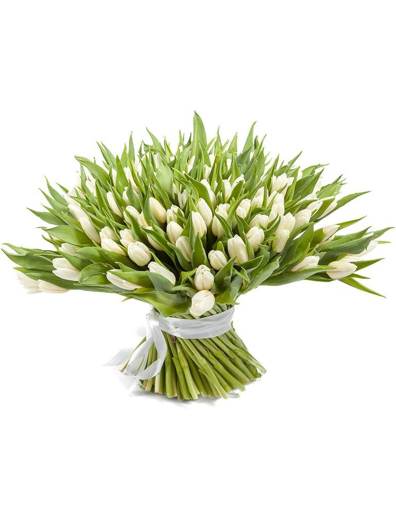 51 or 101 white tulips