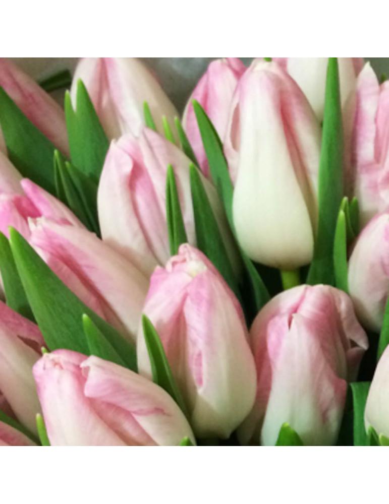 11 Розовые тюльпаны
