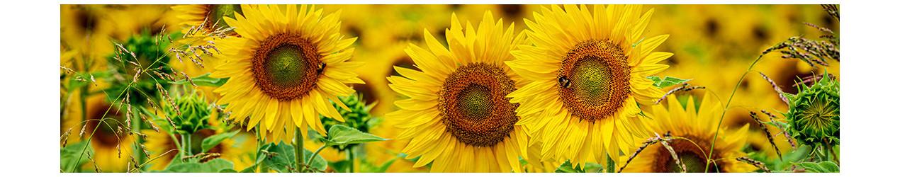 Vasaras ziedi ar piegādi
