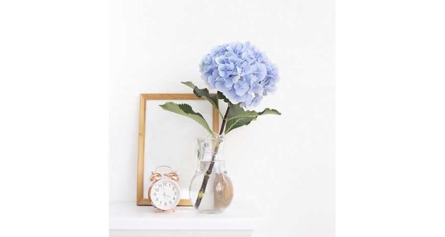 Hortenzijas - karaliski krāšņie ziedi